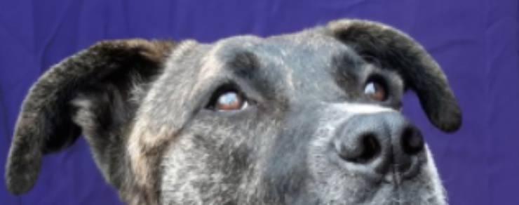 Gli occhi pieni di paura del cucciolo