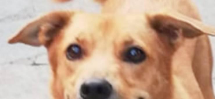Gli occhi pieni di speranza di Buddy