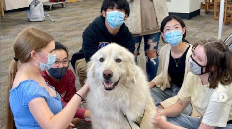 Gruppo di terapia con cane