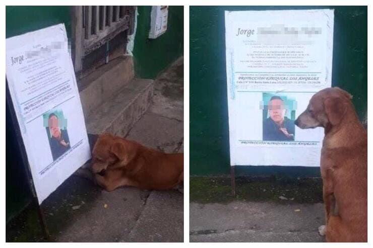 Il cagnolino che non si allontana dalla foto del suo migliore amico (Screen Facebook)