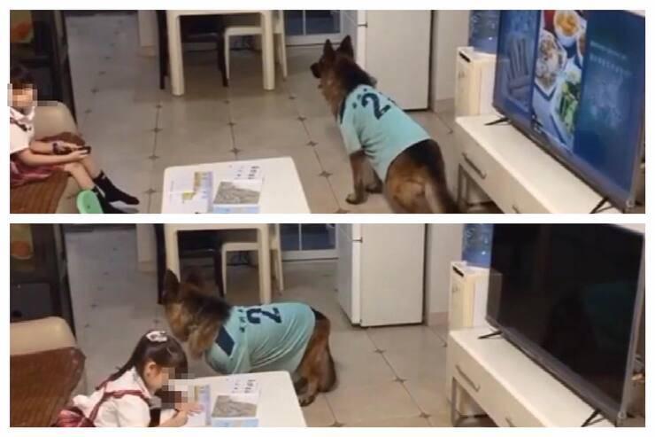 Il cane avverte la bambina che deve tornare a fare i compiti (Screen video)