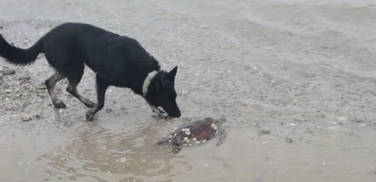 Il cane eroe delle testuggini