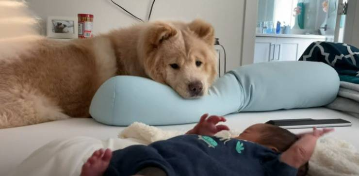Il cane sorveglia il piccolo