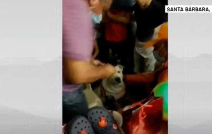 Il cane tra la folla