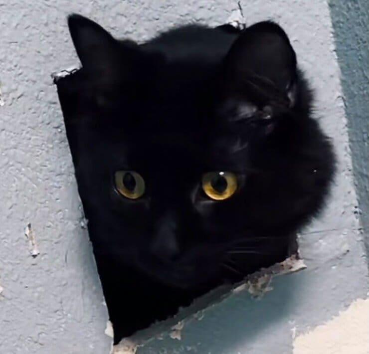 Il meraviglioso gatto dal pelo nero (Screen video)