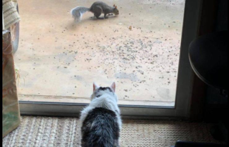 Il micio insegue gli scoiattoli
