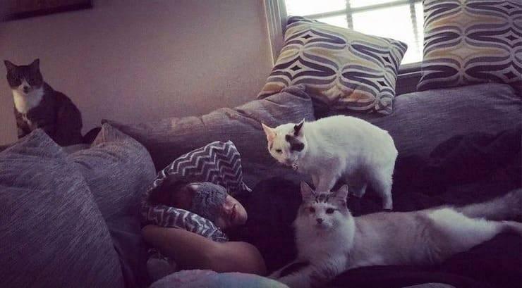 Jennifer insieme ai suoi gatti (Screen Instagram)