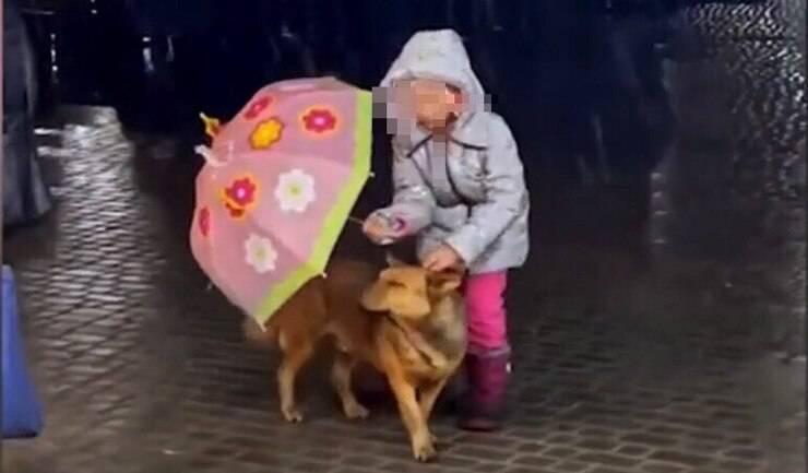 La bimba che protegge con il suo ombrello il cucciolo (Screen video)