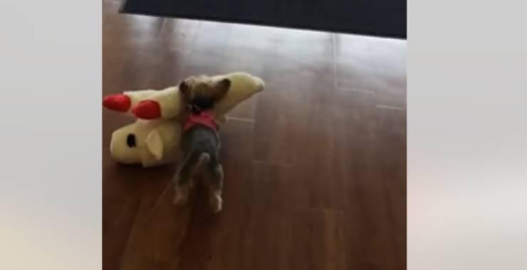 La cagnolina va via con il peluche