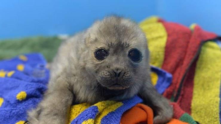 La foca che non vuole abbandonare il rifugio