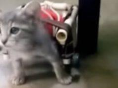 La gattina paralizzata