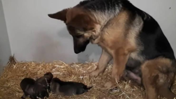 La mamma ed i suoi piccoli