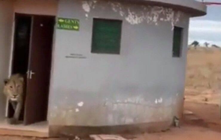 Leone sbuca dalla porta del bagno (Screen video)