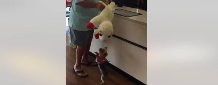 Lucy, la cucciola amante dello shopping