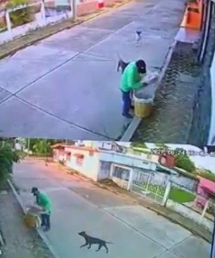 L'uomo si ferma per dare del cibo ai cuccioli (Screen video)