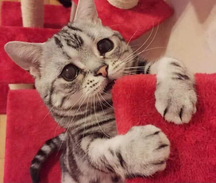 Occhioni gatto (Screen Pinterest)