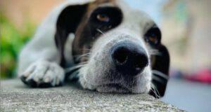 Paese risolve il problema dei cani randagi