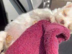 Penelope salvata a quattro settimane