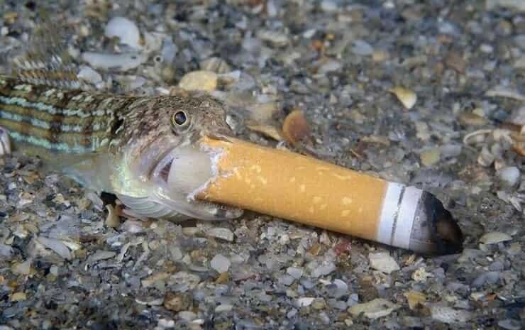 Pesciolino con un mozzicone di sigaretta (Screen Instagram)