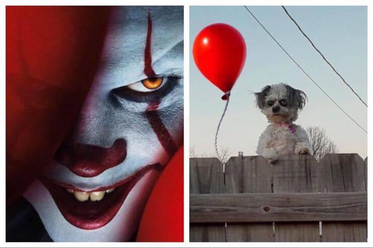 Somiglianze cucciolo (Screen Pinterest e Twitter)