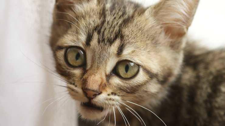 attacchi di panico gatto
