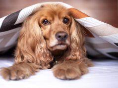 Fido si infila sotto le coperte