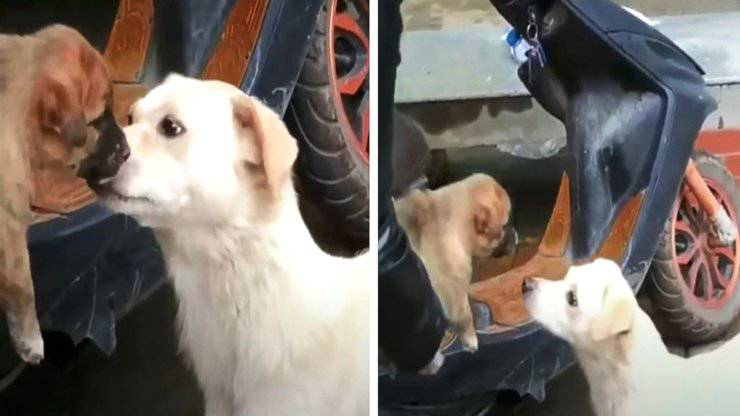 cane mamma saluta bacio cucciolo