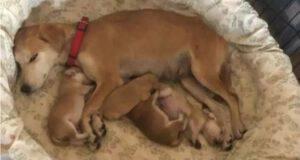 cagnolina ed i suoi piccoli