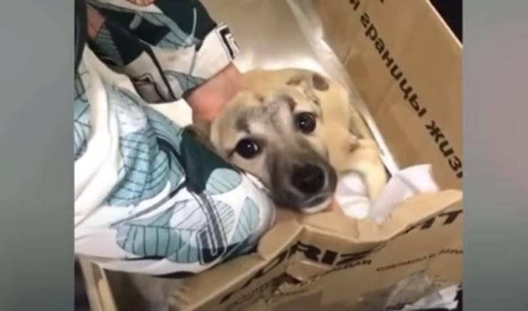 Cane in cerca di aiuto (Foto video)