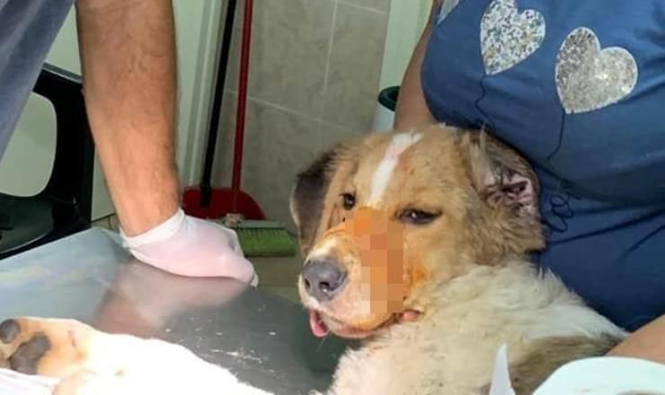 Il cane curato dai medici (Foto Facebook)