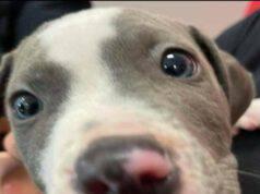 Uno dei cani salvati dal maltrattamento (Foto Facebook)