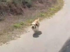 Cane che rincorre l'autobus (Foto Video)