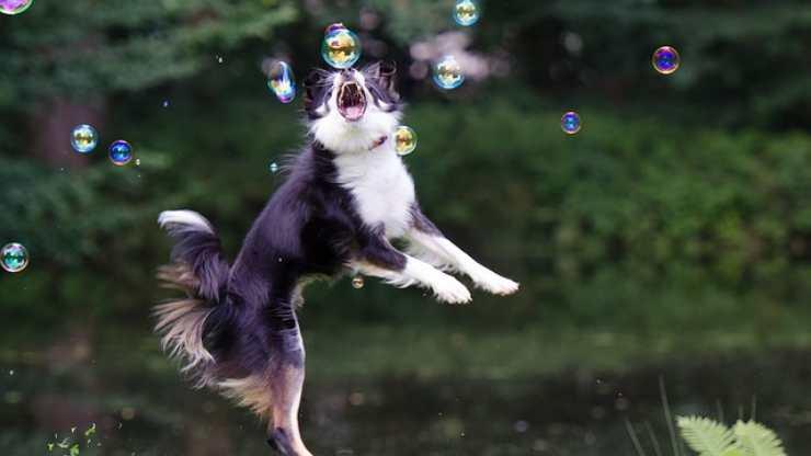 cane e bolle