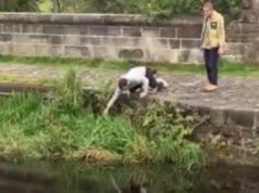 cane nel fiume recuperato da un passante