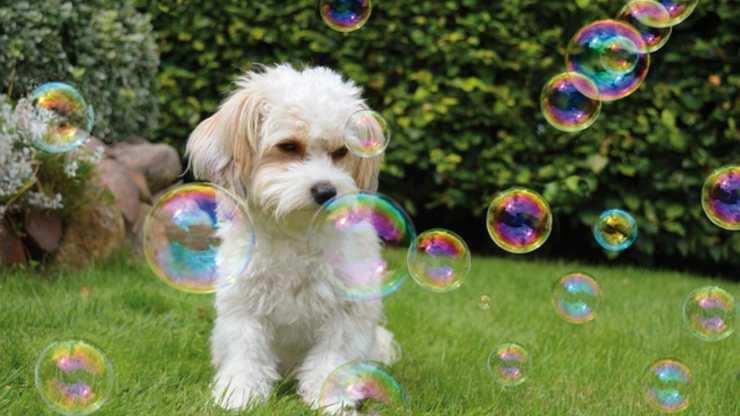 cani possono giocare con le bolle di sapone