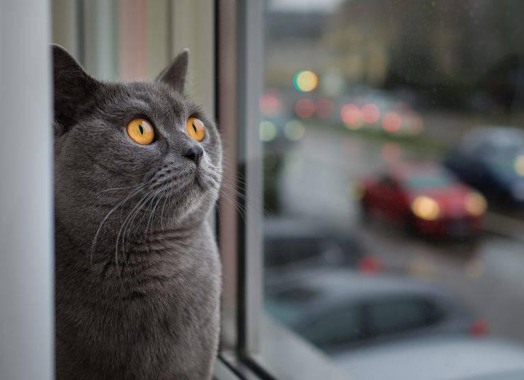 Micio osserva da lontano