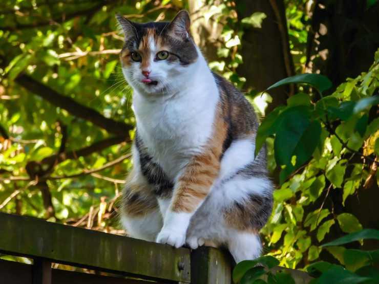 Perché il gatto guarda da lontano