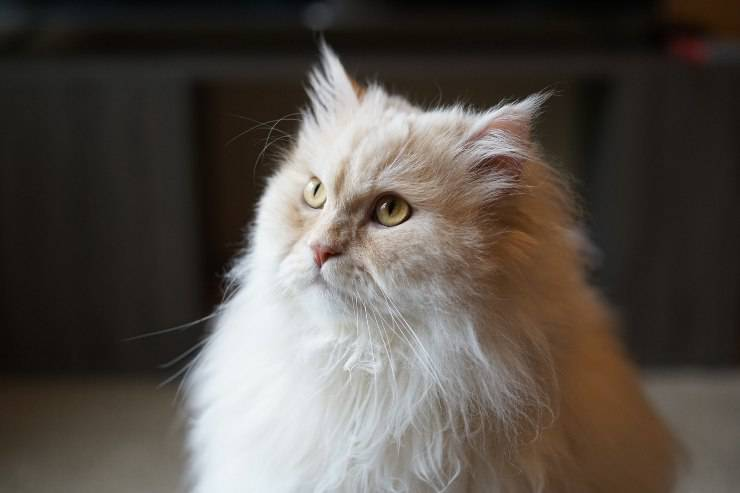 Felino indifferente