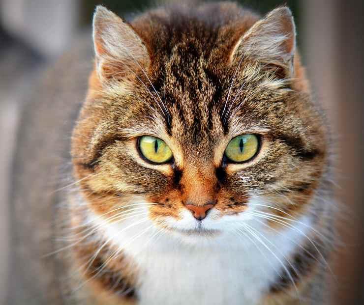 Gattino poco socievole