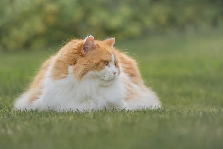 Il gatto indifferente