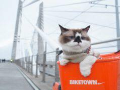Come portare il felino in bici