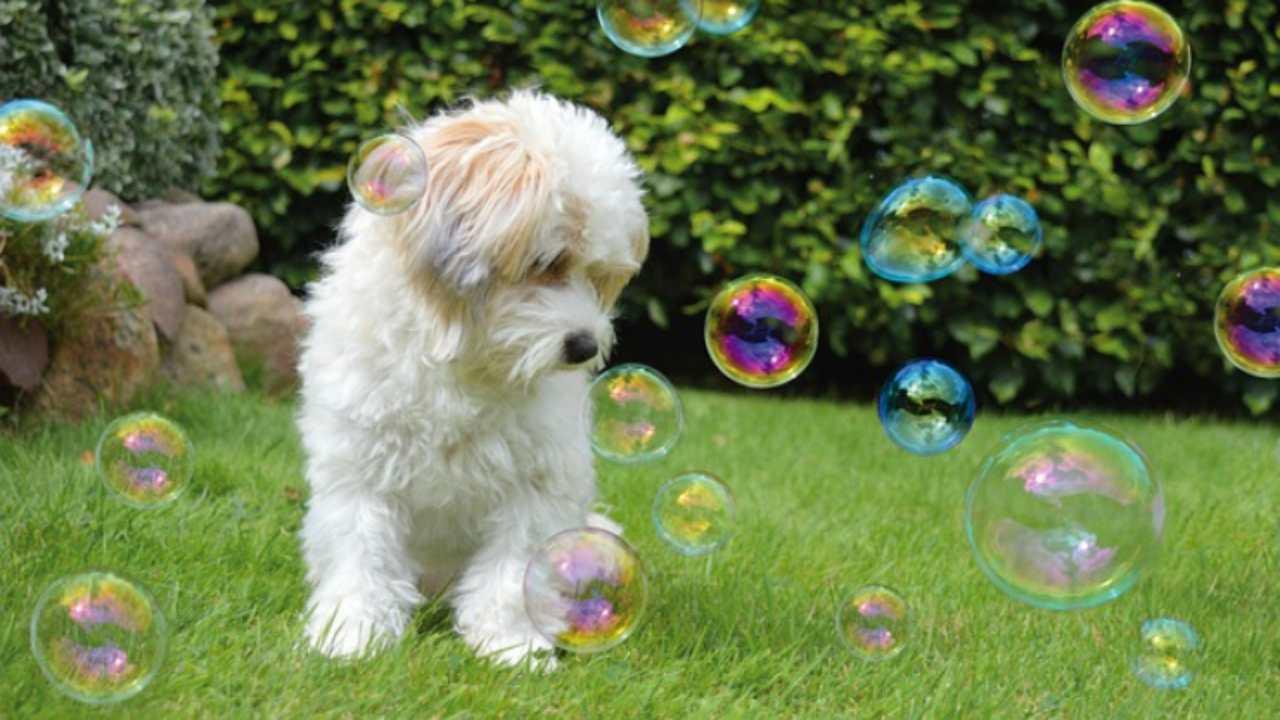 come far giocare al cane con le bolle
