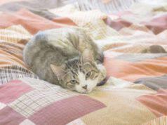 come togliere peli gatto piumone