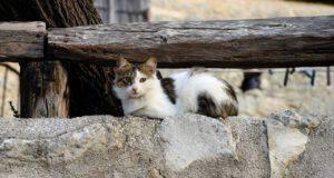 cura gatto egeo