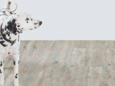 deficit da attenzione iperattività cane