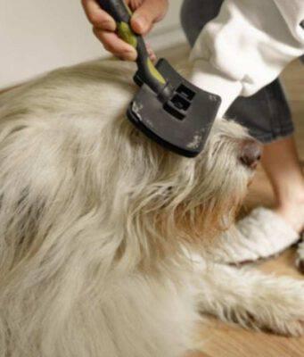 districare e sciogliere nodi cane