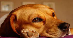 Il cane e le allergie