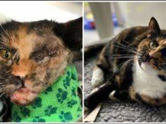 Il gatto salvo per miracolo dopo essere stato investito da un autobus Trova una casa per sempre (Foto Facebook)