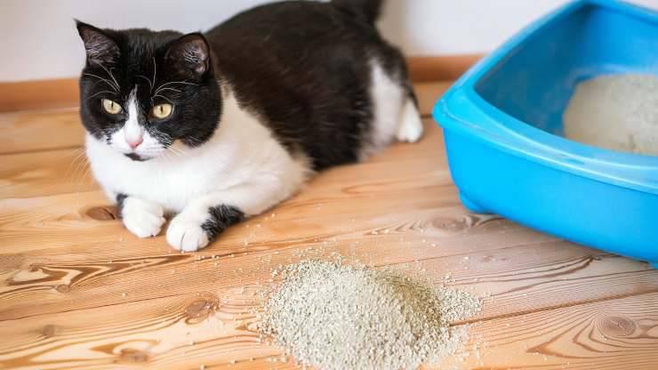 evitare che il gatto butti la sabbia fuori dalla lettiera
