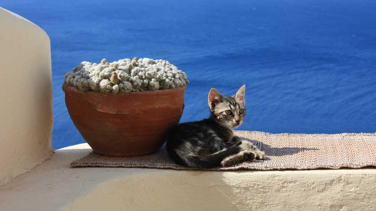gatto egeo adottare